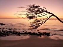 Sun-Einstellung im Newport-Strand stockfotos