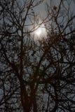 Sun-Eklipse- und -winterbaumaste Stockbilder