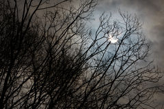 Sun-Eklipse- und -winterbaumaste mit bewölktem Himmel Stockfotografie
