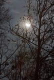 Sun-Eklipse- und -winterbaumaste mit bewölktem Himmel Stockbild
