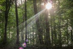 Sun en árboles Foto de archivo