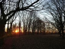 Sun en bas des bois photos stock