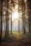 Sun en bosque Foto de archivo