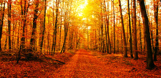 Sun en bosque del otoño Foto de archivo