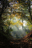 Sun en el bosque imagen de archivo libre de regalías
