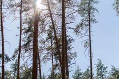 The Sun en el bosque Foto de archivo