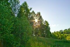 The Sun en el bosque del verano. Foto de archivo