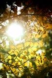 Sun en el toldo Imágenes de archivo libres de regalías