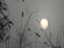 Sun en la niebla almacen de video