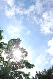 Sun en la ramita Imagenes de archivo
