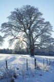 Sun en prado nevoso fotos de archivo libres de regalías