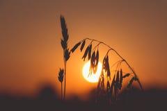 Sun en retroiluminado imagen de archivo libre de regalías