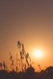 Sun en retroiluminado fotos de archivo libres de regalías