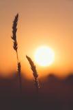 Sun en retroiluminado imagenes de archivo