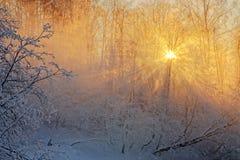 Sun&en x27; s rays i en frostig morgon på floden Arkivbilder