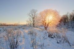 Sun&en x27; s-strålar till och med trädfilialer i vinter Royaltyfria Bilder