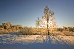 Sun&en x27; s-strålar till och med trädfilialer i vinter Fotografering för Bildbyråer