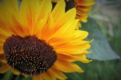 Sun en vert photos stock