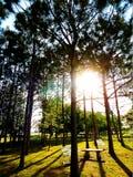 Sun encima de árboles de pino Fotos de archivo libres de regalías