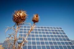 Sun Energy Farm - Stock Image Royalty Free Stock Photo
