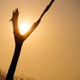 Sun entre la fourche du bois Photos stock