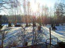 Sun entre les arbres, images stock
