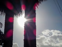 Sun entre les arbres photos libres de droits