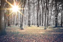 Sun entre les arbres Photo stock