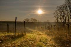 Sun entre les barrières image libre de droits