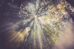Sun erweitert sich, den Rauch im Wald kreuzend Lizenzfreie Stockbilder