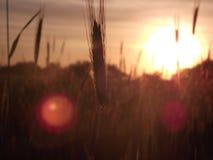 Sun es brillante Imagen de archivo