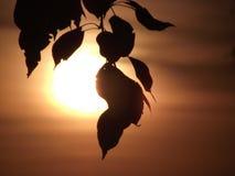 Sun es brillante Fotografía de archivo libre de regalías