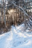 Sun es brillante a través de árboles y está encendiendo camino en el invierno f Imagenes de archivo
