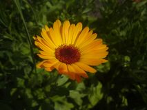 The Sun est beau photos stock