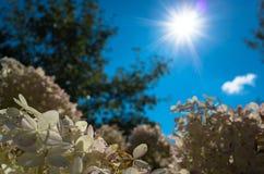 Sun est brillant au-dessus des fleurs Photo stock