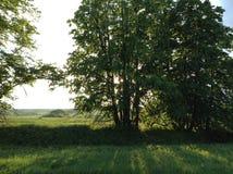 Sun et arbres Photographie stock libre de droits