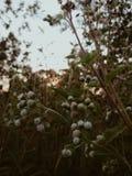 Sun et fleurs image libre de droits