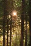 Sun et forêt Photos libres de droits