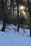 Sun et neige dans la forêt Image libre de droits