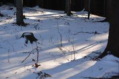 Sun et neige dans la forêt Images libres de droits