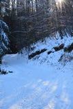 Sun et neige dans la forêt Photos stock