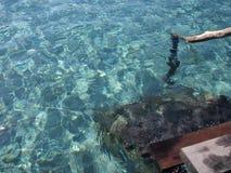 sun för hav för bakgrundsfiordsstråle Royaltyfria Foton