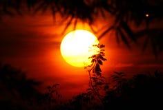 sun för silhouette ii Royaltyfria Foton