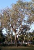 Sun faces autumn trees royalty free stock photos