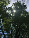 Sun faisant une pointe par les arbres photographie stock