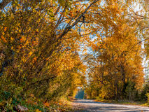 The sun, fall, wood, road. Stock Photography