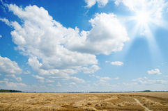 Sun and field Stock Photography