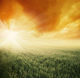 Sun on the field Royalty Free Stock Photos