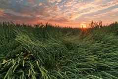 Sun in field Stock Image