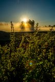 Sun in a field near forest. Dawn scenic landscape with mist and sun in a field near forest and birch trees glowing with sun light fog royalty free stock images